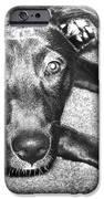 Loyal Friend IPhone Case by Shawna Rowe