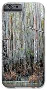 Magical Bayou IPhone Case by Carol Groenen