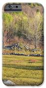 Maine Blueberry Field In Spring IPhone 6s Case by Keith Webber Jr