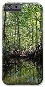 mangrove forest in Costa Rica 2 IPhone Case by Rudi Prott