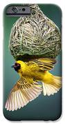 Masked Weaver At Nest IPhone Case by Johan Swanepoel