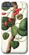 Menispermum IPhone Case by LFJ Hoquart