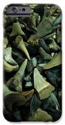 Miocene Fossil Shark Tooth Assortment IPhone Case by Rebecca Sherman
