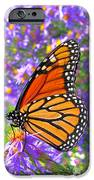Monarch Butterfly IPhone Case by Olivier Le Queinec