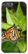Monarch Egg Time IPhone Case by Steve Augustin