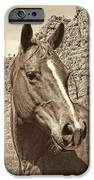 Montana Horse Portrait In Sepia IPhone Case by Jennie Marie Schell