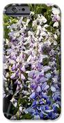 Nancys Wisteria 3 Db IPhone Case by Rich Franco