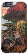 Nankoweap Cactus IPhone Case by Inge Johnsson