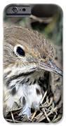 Nest In A Tree IPhone Case by Susan Leggett