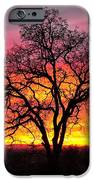 Oak Silhouette IPhone Case by Cheryl Young