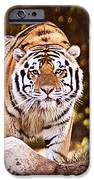 On The Prowl IPhone 6s Case by Scott Pellegrin