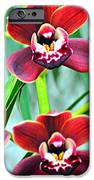 Orchid Rusty IPhone Case by Marty Koch