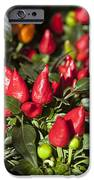 Ornamental Peppers IPhone Case by Peter French