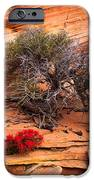 Paintbrush And Juniper IPhone Case by Inge Johnsson
