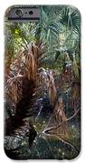 Pepper Creek Palm IPhone Case by Sheri McLeroy