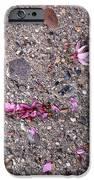 Philadelphia Street Art IPhone Case by Rona Black