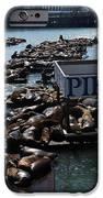 Pier 39 San Francisco Bay IPhone Case by Aidan Moran