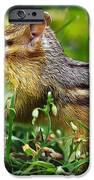 Princess Buttercup IPhone Case by Bill Caldwell -        ABeautifulSky Photography
