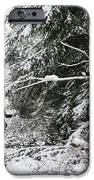 Protective Forest In Winter With Snow Covered Conifer Trees IPhone Case by Matthias Hauser