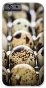 Quail Eggs IPhone Case by Elena Elisseeva