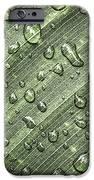 Raindrops On Green Leaf IPhone Case by Elena Elisseeva