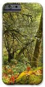 Rainforest Trunk IPhone Case by Adam Jewell
