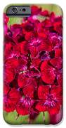 Red Carnations IPhone Case by Omaste Witkowski