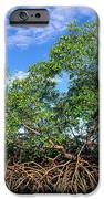 Red Mangrove East Coast Brazil IPhone Case by Pete Oxford