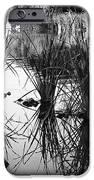 Reeds IPhone Case by Arne Hansen