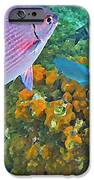Reef Life IPhone Case by John Malone