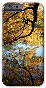 Reflections IPhone Case by John Telfer