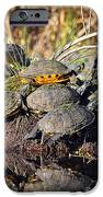 Reptile Refuge IPhone Case by Al Powell Photography USA