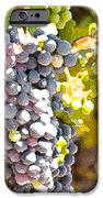 Ripe Grapes IPhone Case by Artist and Photographer Laura Wrede