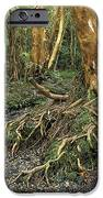 Roots IPhone Case by James Brunker
