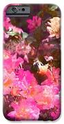 Rose 216 IPhone Case by Pamela Cooper