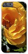Roses Have Thorns IPhone Case by Janice Rae Pariza