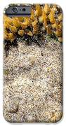 Sea Anenome In The Sand IPhone Case by Artist and Photographer Laura Wrede