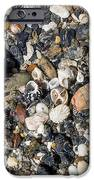 Seaweed And Shells IPhone Case by Steven Ralser