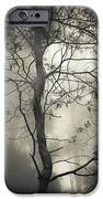Silent Stirring IPhone Case by Amy Weiss