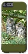 Sleeping Barred Owlets IPhone Case by Jennie Marie Schell