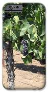 Sonoma Vineyards In August In The Sonoma California Wine Country 5d24487 IPhone Case by Wingsdomain Art and Photography