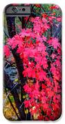 Southern Fall IPhone Case by Chad Dutson