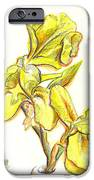 Spanish Irises IPhone Case by Kip DeVore