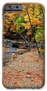 Spectrum Of Color IPhone Case by Frozen in Time Fine Art Photography
