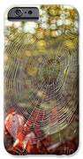 Spider Web IPhone Case by Edward Fielding