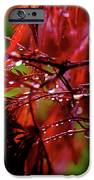 Spring Rain IPhone Case by Rona Black