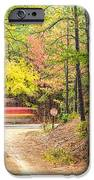 Stop - Beaver's Bend State Park - Highway 259 Broken Bow Oklahoma IPhone Case by Silvio Ligutti
