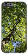 Summer Tree Canopy Landscape IPhone Case by Christina Rollo
