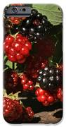 Summer's Bounty IPhone Case by Donna Kennedy