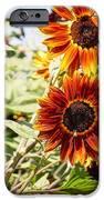 Sunflower Cluster IPhone Case by Kerri Mortenson